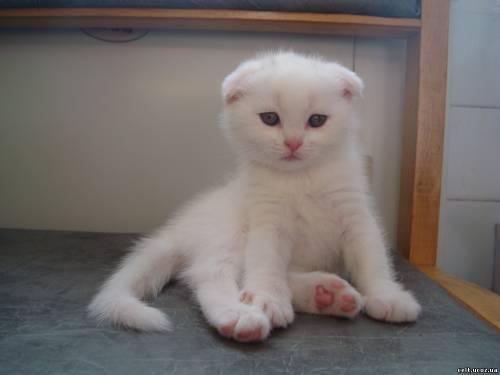 Котику 1 мес. 1 неделя